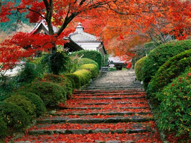VIAJES A JAPON, TIERRA DEL SOL NACIENTE - Buteler Turismo