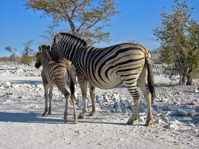 VIAJES A NAMIBIA DESDE ARGENTINA - Parque Nacional de Etosha / Sossusvlei / Swakopmund / Windhoek / Johannesburgo /  - Buteler Turismo