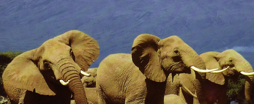 VIAJES A LO MEJOR DE AFRICA DESDE ARGENTINA - Nairobi / Parque nacional de Amboseli / Area Ngorongoro / Arusha / Parque nacional de Tarangire / Parque nacional Serengueti / Zanzibar /  - Buteler Turismo