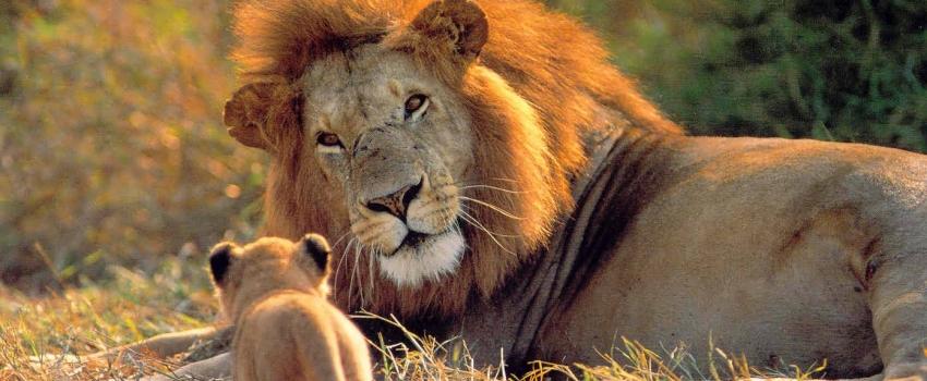 VIAJES GRUPALES A SUDAFRICA DESDE ARGENTINA - Ciudad del Cabo / Johannesburgo / Knysna / Mpumalanga / Oudtshoorn / Parque nacional Kruger / Puerto Elizabeth /  - Buteler Turismo