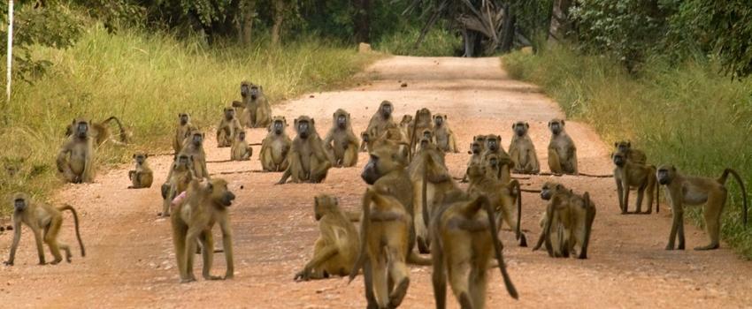 SALIDAS GRUPALES A SUDAFRICA DESDE BUENOS AIRES